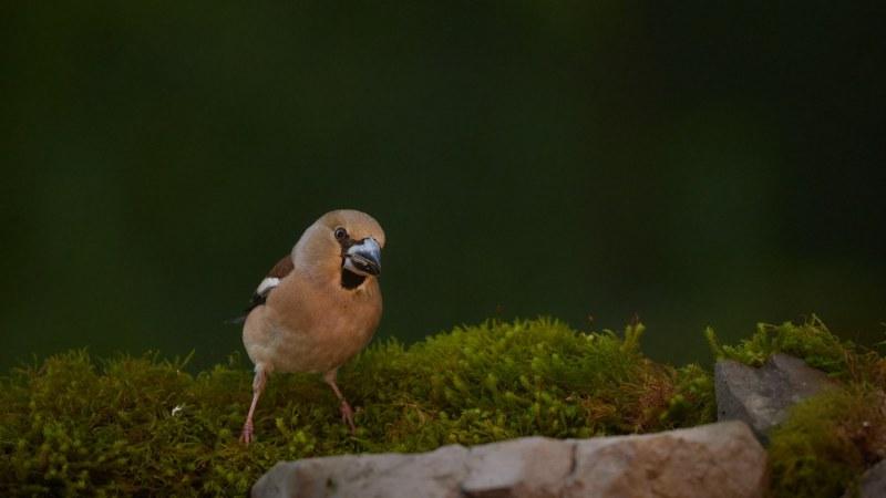 birds_022