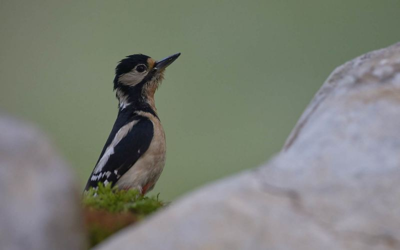 birds_023
