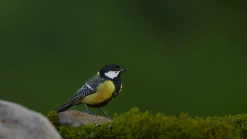 birds_027