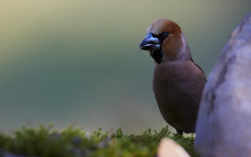 birds_032