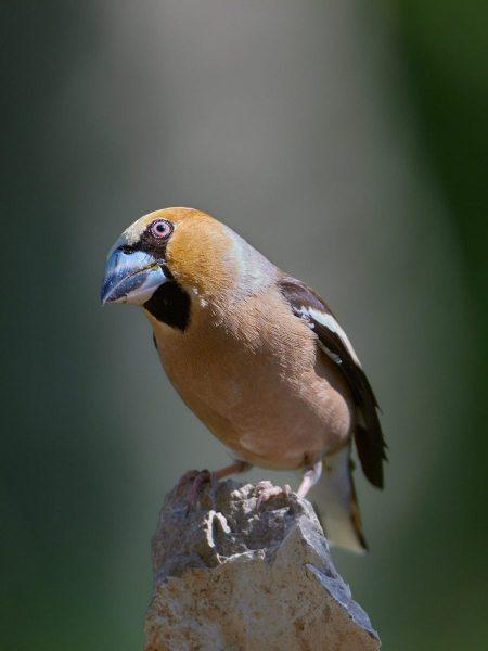 birds_035