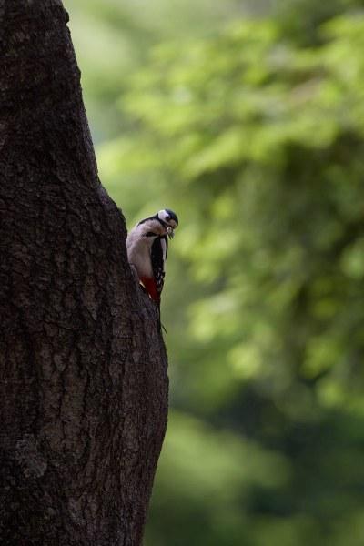 birds_036