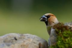 birds_030