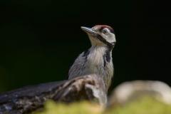 birds_034