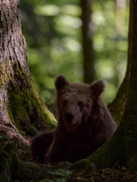 slovenia_bear_002