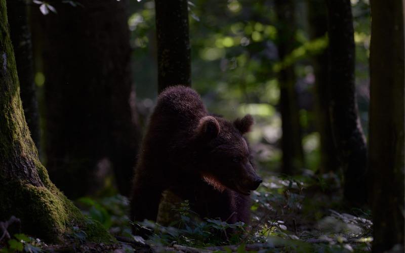 slovenia_bear_004