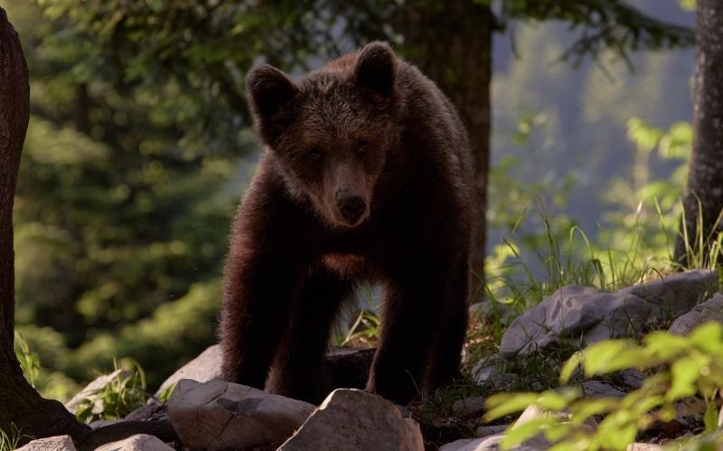 slovenia_bear_011