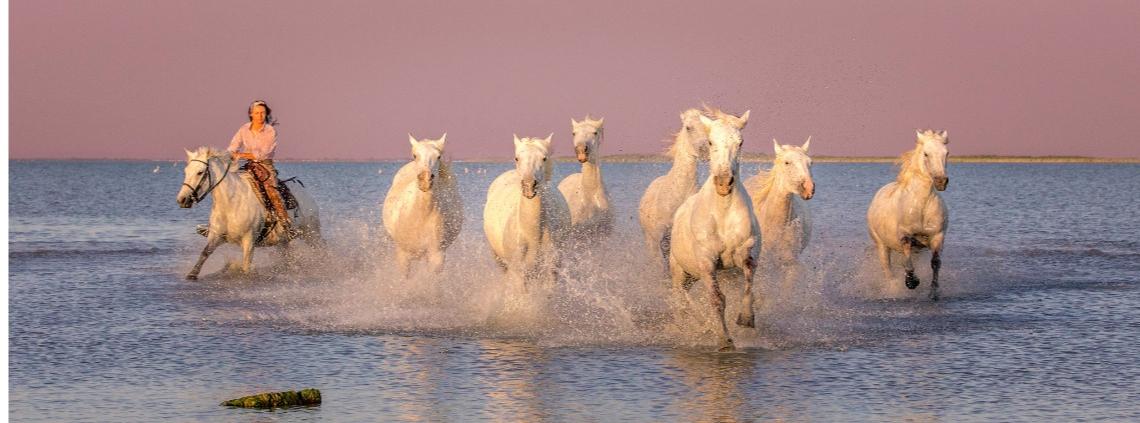 france, provence, horses, camargue,
