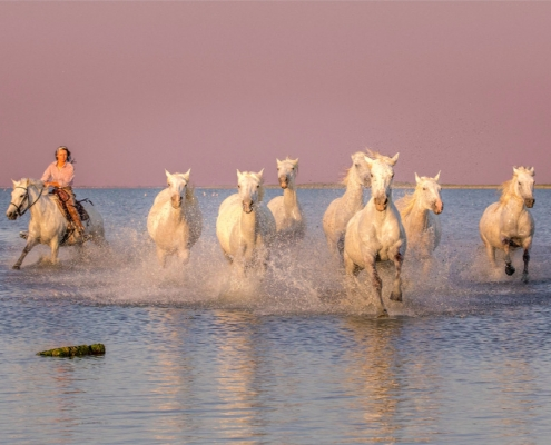 france, provence, horses, camargue,